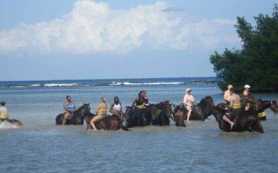 Group_Horses